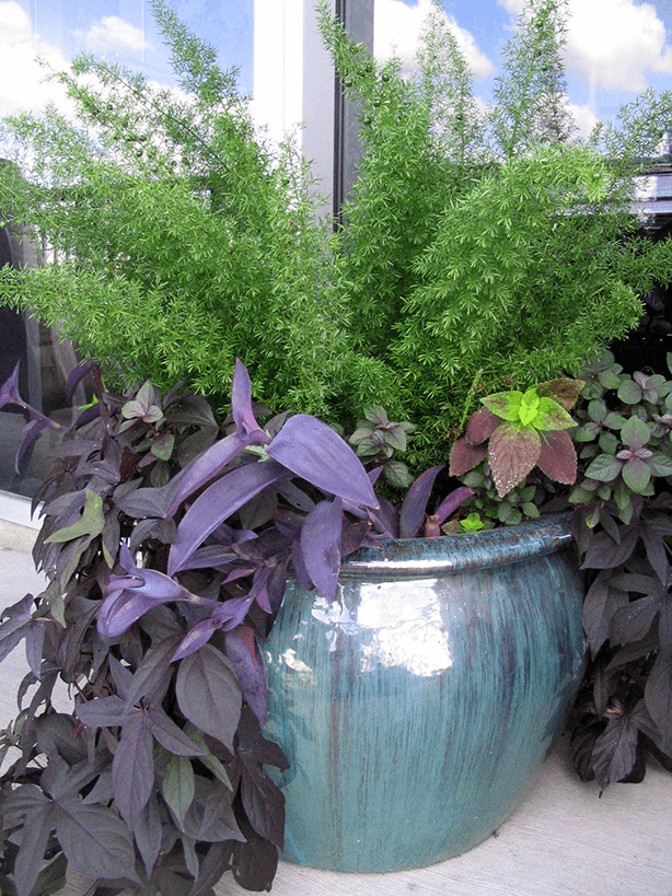 plant pot with purple and greens