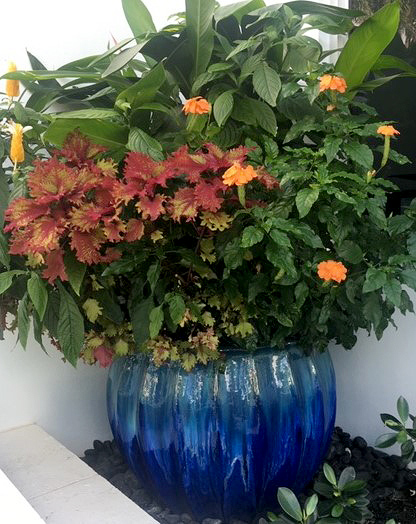 Container gardens for color bursts