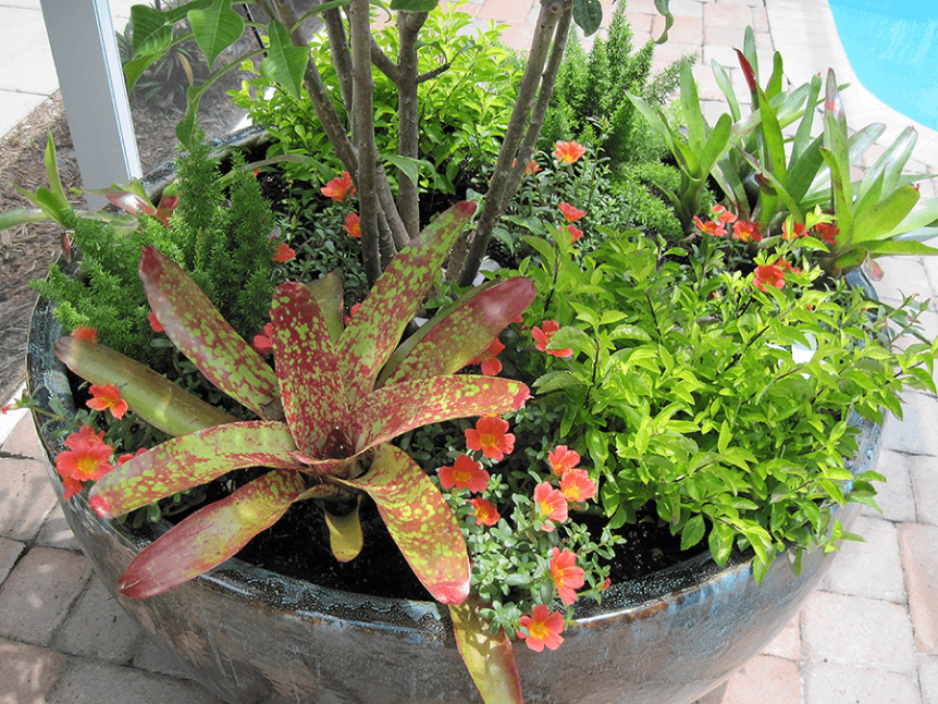 pool area planter with lots of greens