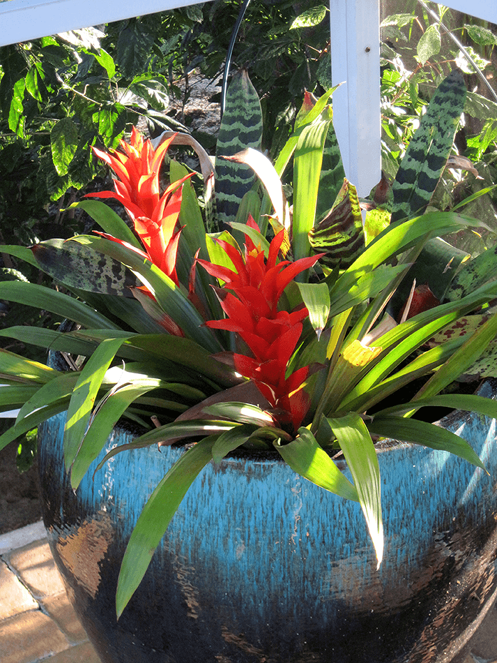 plant container with vibrant tropical plants